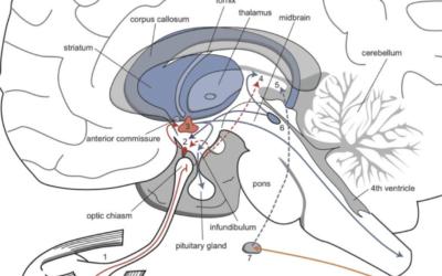 Luce, melatonina e ciclo sonno-sveglia